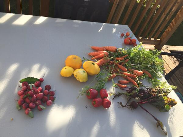 Gardening blog - harvest