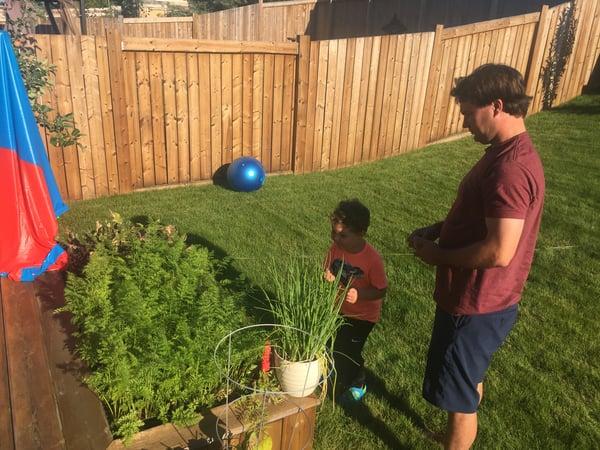 Gardening blog - veggie patch